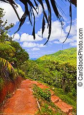 Pathway in jungles, Vallee de Mai, Seychelles