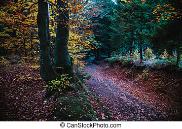 pathway in the autumn forest, colorful trees