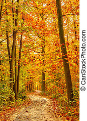 Pathway in the autumn forest - Pathway through the autumn...