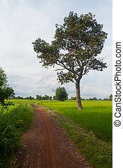Pathway in the countryside.