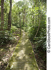 Pathway in the forest.