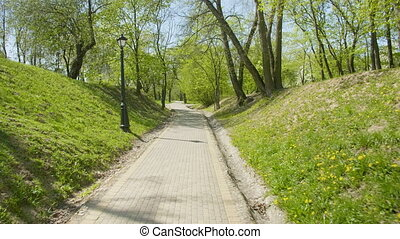 Pathway in the green spring park, daylight.