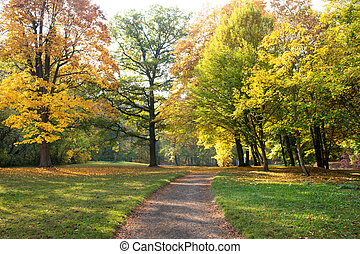 Pathway in the park in autumn season