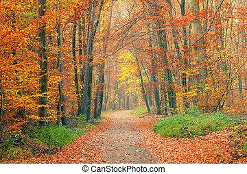 pathway, ind, den, efterår skov