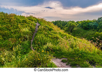 Pathway on a hill with wildflowers