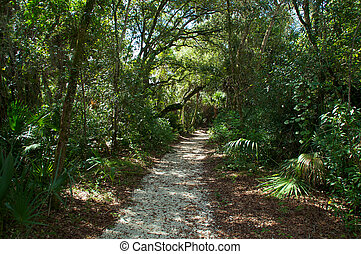 pathway through subtropical forest