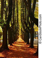 Pathway through the autumn