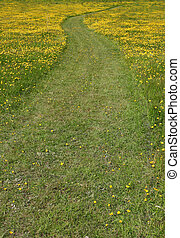 Pathway Through the Buttercups