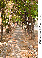 Pathway under the trees