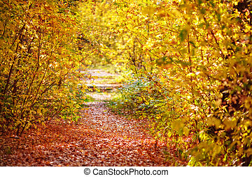Pathway with fallen leaves through the colourful autumn forest