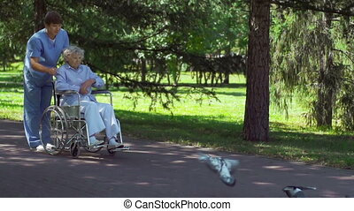 Patient Feeding Pigeons - Aged woman seated on wheelchair...