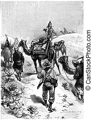 Patients were lying on the back of two camels, vintage ...
