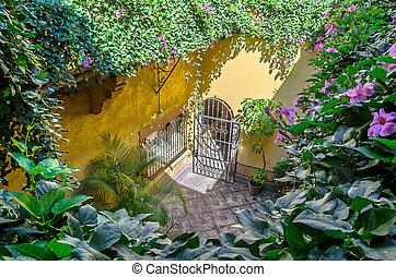 patio, couvert, escalade, plante, fleurs, ensoleillé, lumière