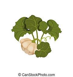 Patisson concept. Organic food concept. Vector illustration.