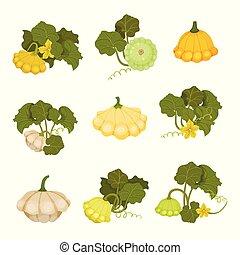 Patisson set. Organic food concept. Vector illustration.