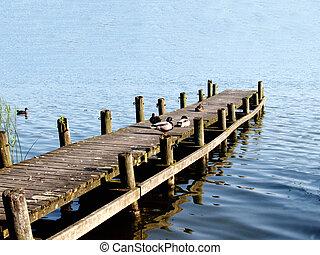 patos, sentando, ligado, um, rampa, em, um, lago