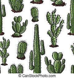 patrón, diferente, vector, cactus, dibujado