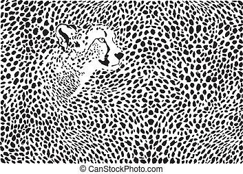 patrón, plano de fondo, guepardos