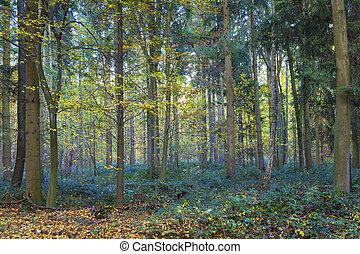 patrón, roble, harmonic, árboles, bosque