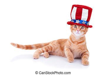 Patriotic cat isolated on white