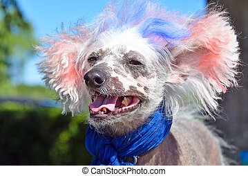patriotic Chinese Crested hairless