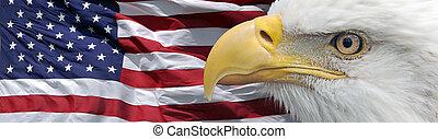 patriotic eagle banner - portrait of a bald eagle in front...