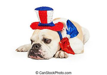 patriotique, bouledogue, américain, fatigué