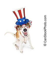 patriotique, rigolote, américain, chien