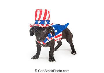 patriotique, rigolote, américain, chiot, chien