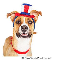 patriotique, rigolote, américain, closeup, chien