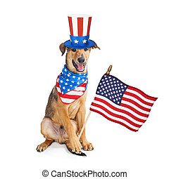 patriotique, rigolote, drapeau, américain, chien