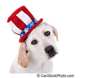 patriotiske, hundehvalp, hund