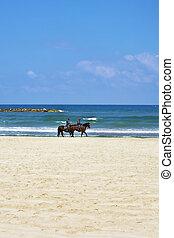 patrulha, cavalo, praia