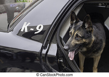 patrullero, policía, k-9