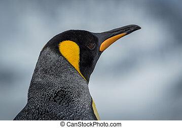 patrząc, król, szczelnie-do góry, aparat fotograficzny, pingwin
