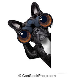 patrząc, lorneta, przez, pies
