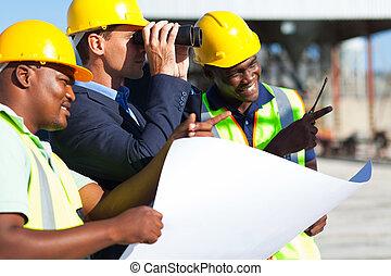 patrząc, projekt, dyrektor, umieszczenie zbudowania