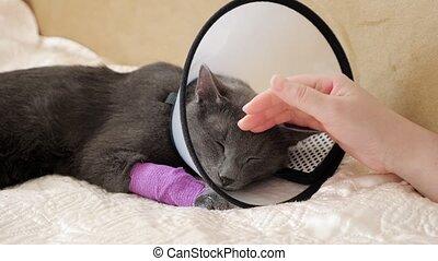 patte, bandé, main femelle, cat., vétérinaire, dormir, ...