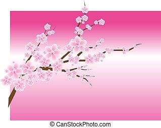 patte, fiore, ciliegia, albero susina, o