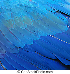 Blue and Gold Macaw feathers - Pattern blue bird feathers,...