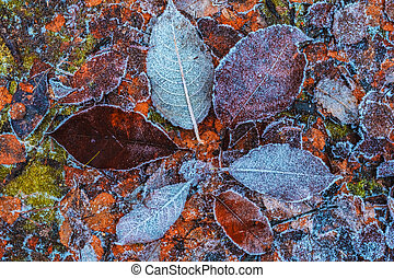 Pattern from fallen leaves in hoarfrost late fall