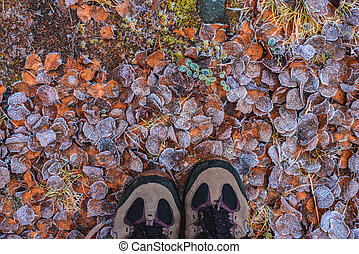 Pattern from fallen leaves in hoarfrost with people shoes late fall