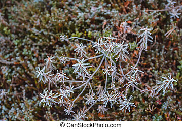 Pattern from frost green plants in hoarfrost late fall
