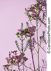 Pattern from the branches of spring pink flowers on a pink...