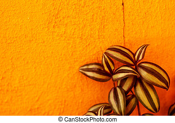 Pattern leaves on a orange wall