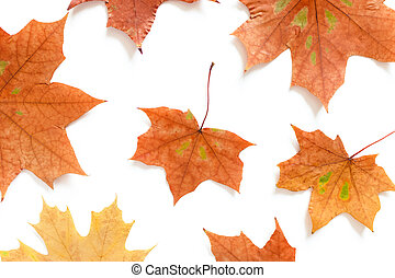 Pattern made from maple leaves