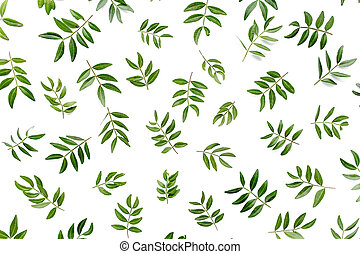 Pattern made of green leaves isolated on white background. lay flat, top view