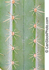 Pattern of a green cactus