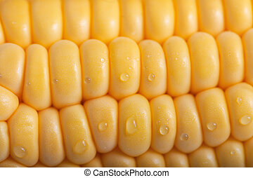 Pattern of fresh sweet corn