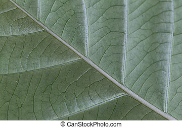 Pattern of green leaves in the garden.
